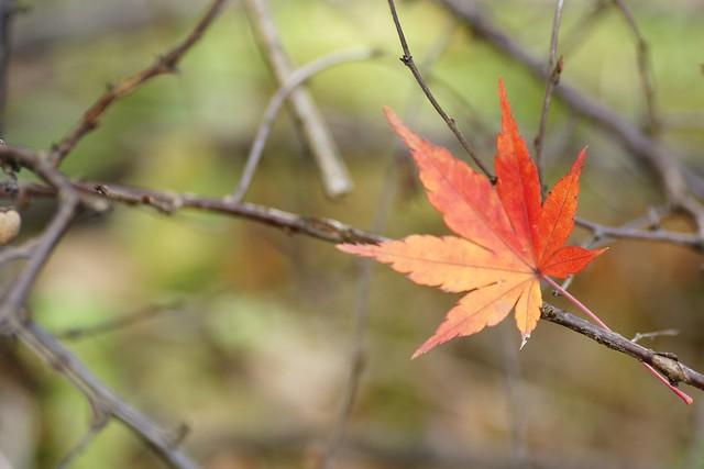写真_もう少し秋でいさせて