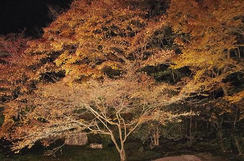【写真】2013 紅葉 : 天授庵/2020-05-17/IMGP3753