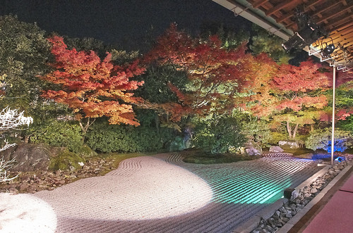 【写真】紅葉 : 圓徳院