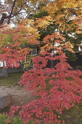 【写真】2013 紅葉 : 妙覚寺/2019-02-10/IMGP4168