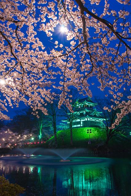写真_夜桜の宴2