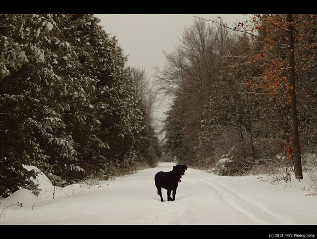 Black dog in white forest #2