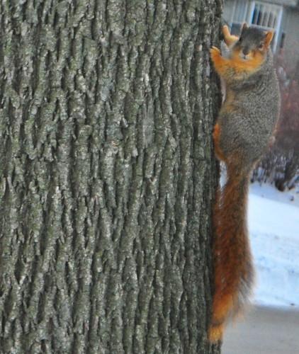 363: Squirrel