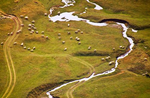 mountain nature grass river way sheep priroda put montenegro rijeka visine crnagora ovce planine bukvicivan maliivelikizurim