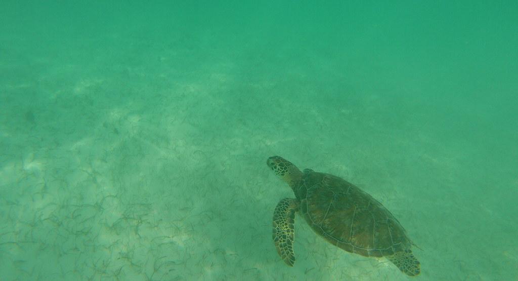 Yucatan trip photos from snorkling 11976473846_a00eb22025_b