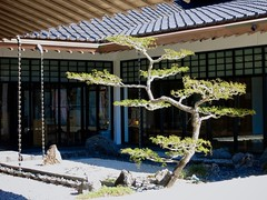 Morikami Japanese Museum and Garden
