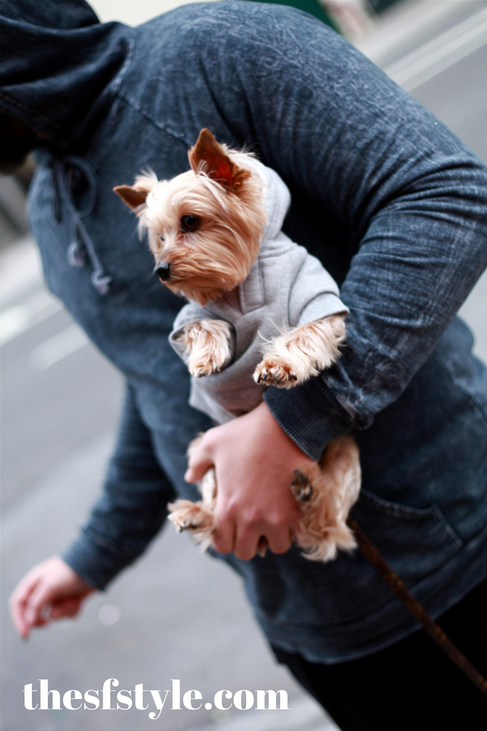 puppy couture, new york streetstyle fashion blog,