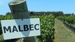 Argentina + Vinos = ¿Malbec?
