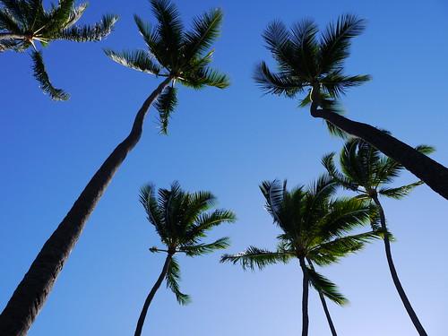 2014.hawaii.ami 078