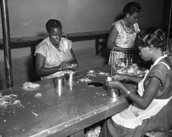 Unidentified picking crabs at the Havana Canning Company in Havana, Florida