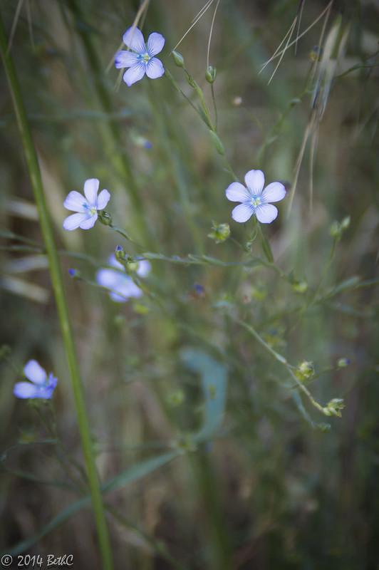 148-365 Flower Fun