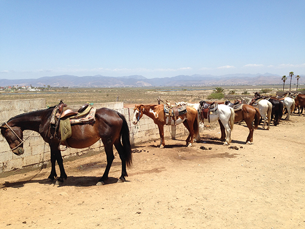 eatsleepwear, mexico, ensenada, travel, horses