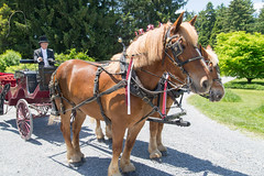 Carriage at Virginia State Arboretum