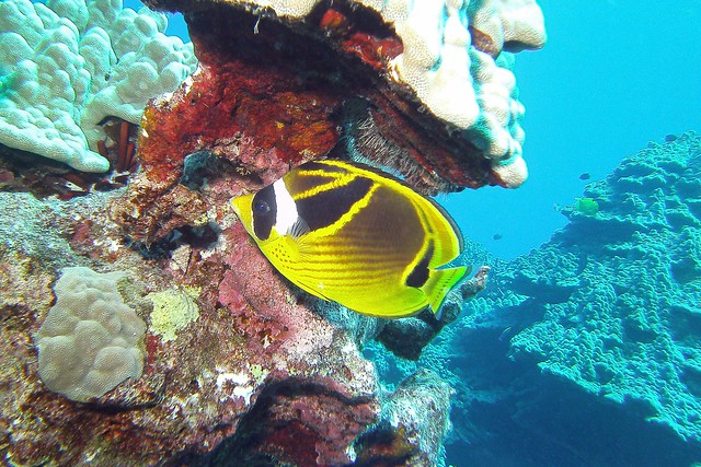 sheltering reef