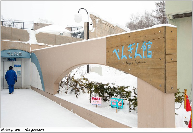 Day5 - 旭山動物園 - 企鵝散步-17