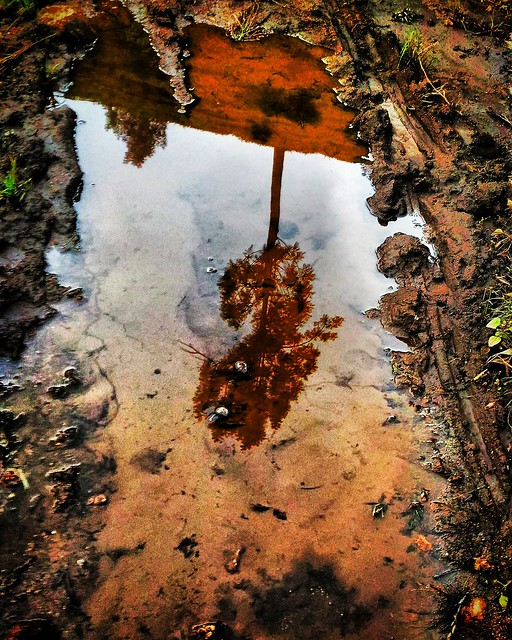 Lonely tree reflection