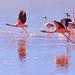 James's flamingo by Johnson Barros