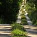 20150704_13 Long, straight forest road - foreground in focus | Ekstakusten, Gotland, Sweden by ratexla
