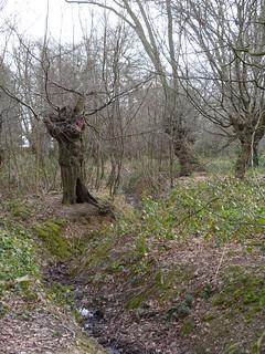 Woodland ditch