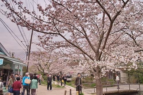 【写真】2013 桜 : 哲学の道/2018-12-24/IMGP9226
