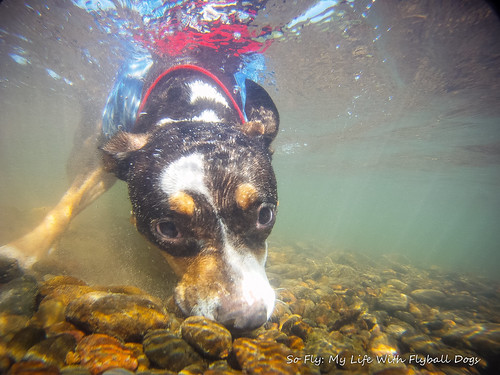 GoPro Under Water-6230