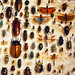 Small photo of Insect Collection