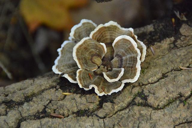 Fun with Fungi