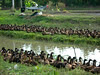duck-camp