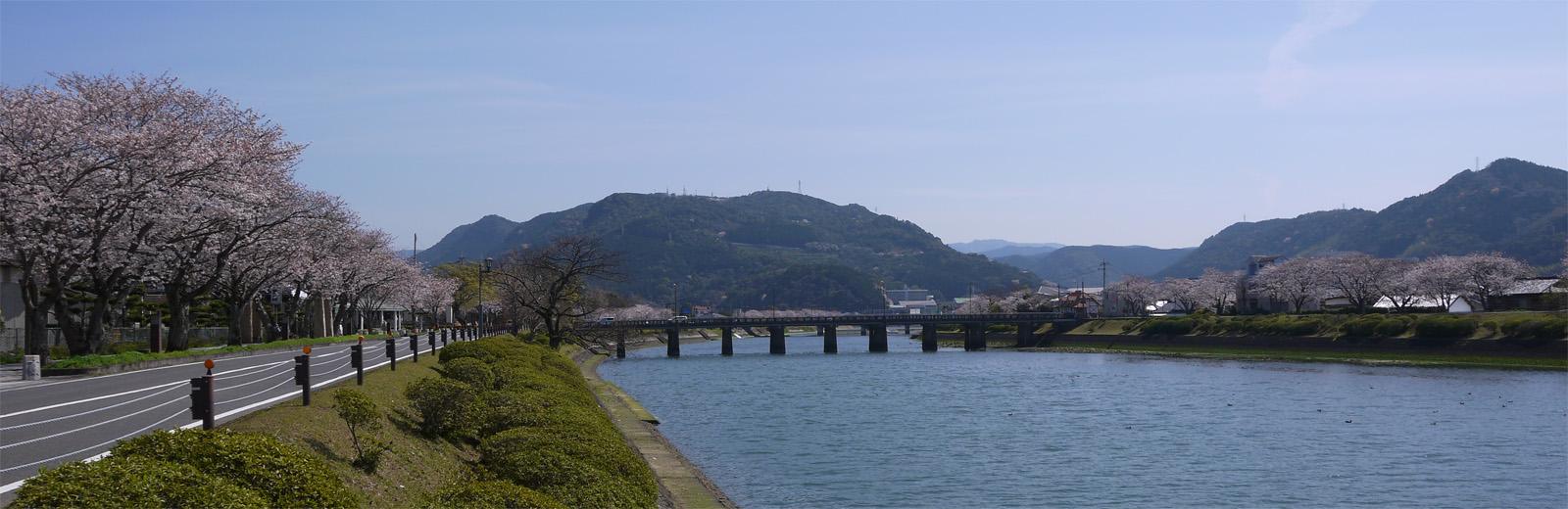 水俣川河畔の桜 | 熊本県水俣市 | 福岡発!! 九州観光ガイド