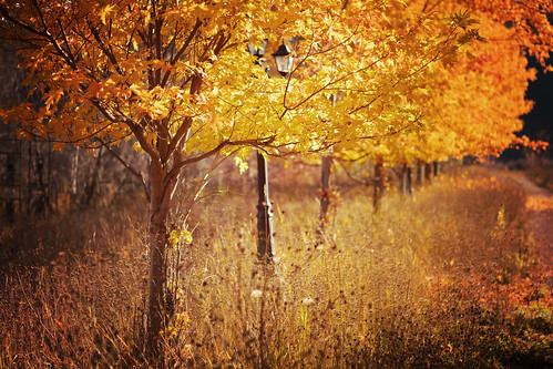 autumn trees fall bc roadtrip princeton rainbowlake