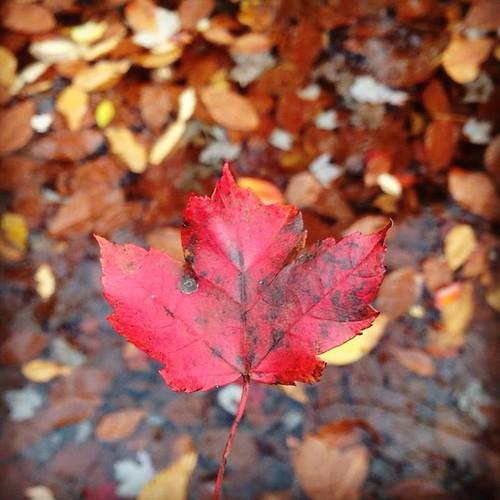 leafoverleaves