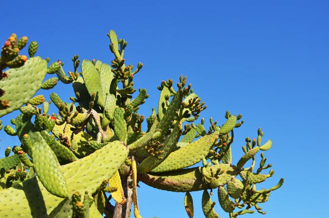 cacti shopping