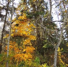 Red Deer Autumn