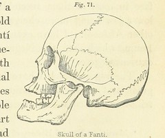Image taken from page 355 of '[The Natural History of Man; comprising inquiries into the modifying influence of physical and moral agencies of the different tribes of the human family.]'