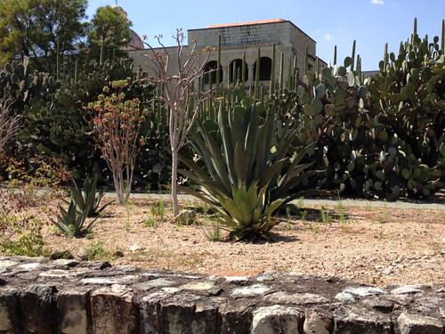 Oaxaca Jardin Ethnobotanico
