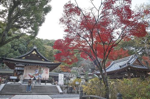 【写真】紅葉 : 松尾大社