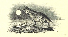"British Library digitised image from page 236 of ""Az 1848-49-iki magyar szabadságharcz története [With illustrations.]"""