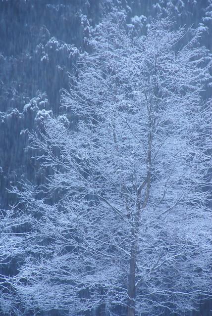 写真_いつの間にか雪の華