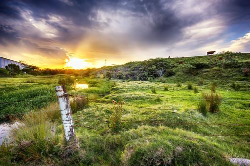 rural landscape cows farm farming australia brisbane queensland hdr