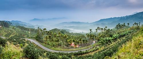 panorama color canon landscape day foggy taiwan 南投 nantou 茶園 teafarm 鹿谷 canoneos5dmarkiii canon5dmarkiii 鳳凰村