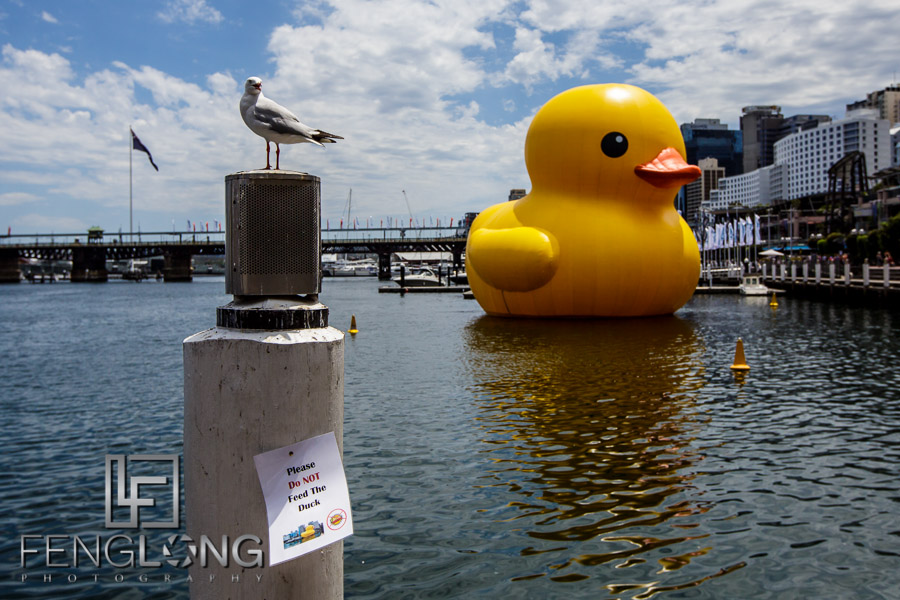Florentijn Hofman's Giant Rubber Duck in Darling Harbour - Sydney Australia 2013