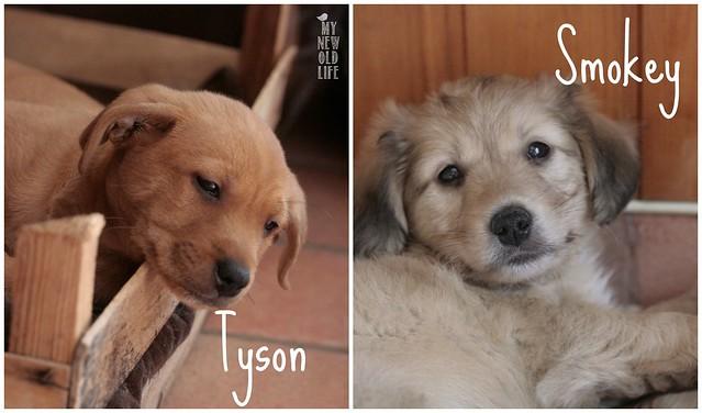 Tyson&Smokey
