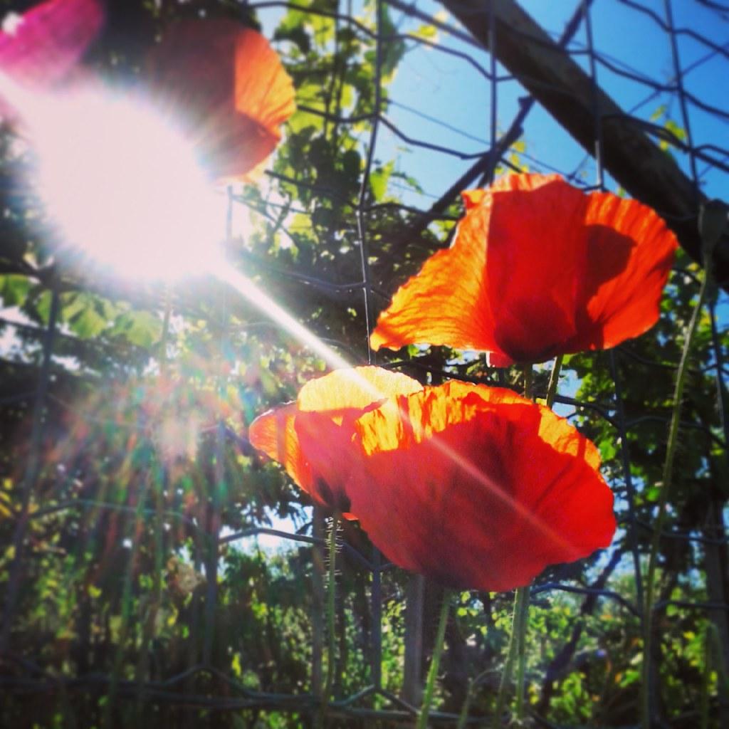 interesting flickr photos tagged scattiitaliani picssr
