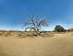 Namibie - Dead Vlei - 22-04-2014 - 10h15