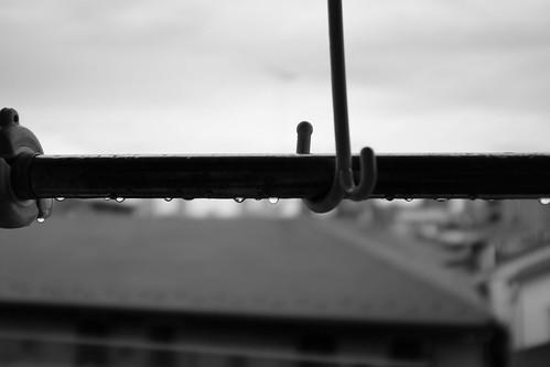 朝、雨上がる。After rain.