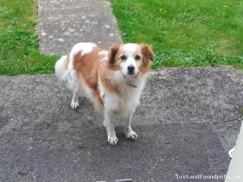 Sat, Oct 29th, 2016 Found Female Dog - Mountrice, Monasterevin, Kildare