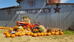 Fall in Texas