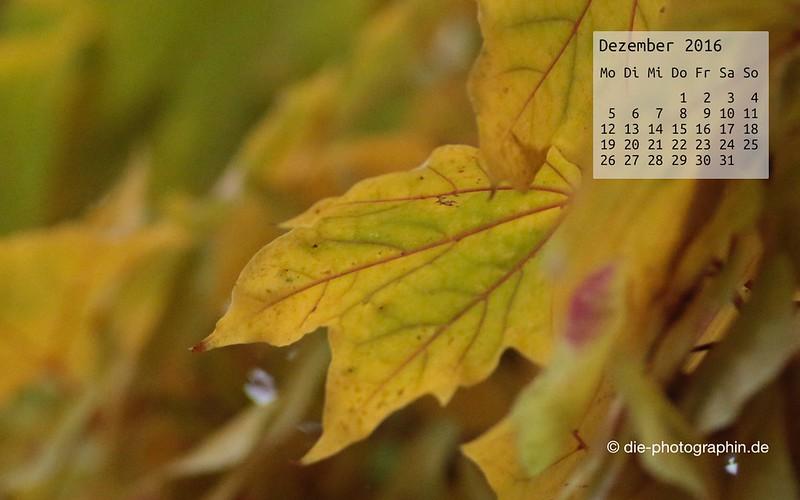 herbstlaub_dezember_kalender_die-photographin