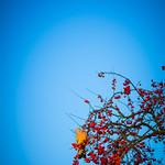 fall-16