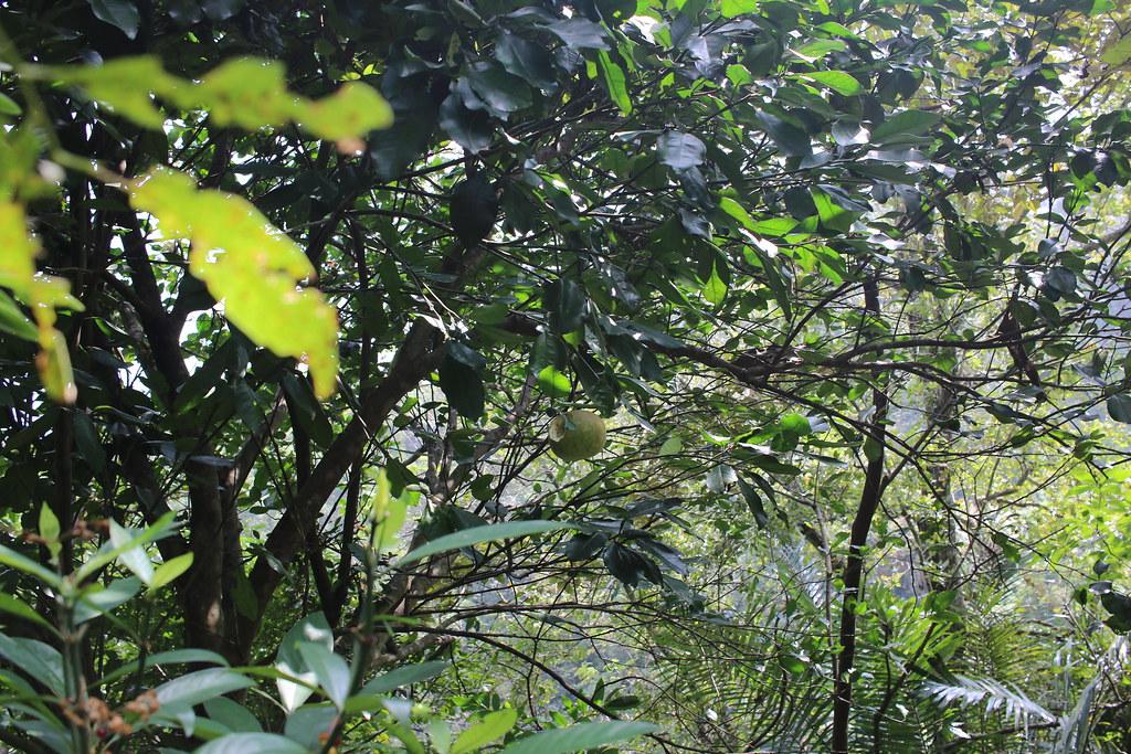 公館大象自然生活農場 (23)